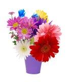 Flores de la margarita Imagenes de archivo