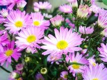 Flores de la margarita foto de archivo