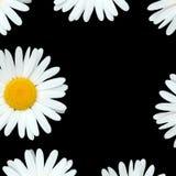 Flores de la margarita stock de ilustración