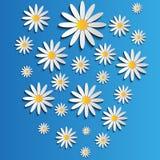 Flores de la margarita blanca ilustración del vector