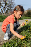 Flores de la margarita de la cosecha de la muchacha Imágenes de archivo libres de regalías