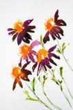 Flores de la margarita en acuarela stock de ilustración
