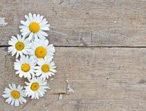 Flores de la margarita en fondo de madera Fotos de archivo