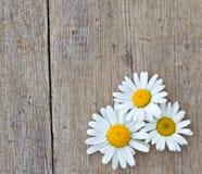 Flores de la margarita en fondo de madera Fotografía de archivo