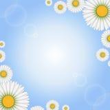 Flores de la margarita en fondo ligero ilustración del vector