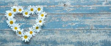 Flores de la margarita en fondo de madera Imagen de archivo