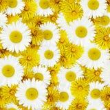 Flores de la margarita y del diente de león Foto de archivo libre de regalías