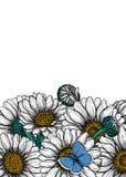 Flores de la margarita y tarjeta azul común de la mariposa stock de ilustración