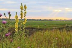 Flores de la miel del campo en la puesta del sol Fotografía de archivo