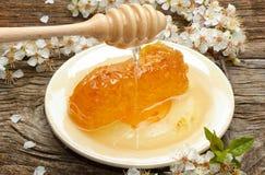 Flores de la miel, del panal y del albaricoque Imagen de archivo