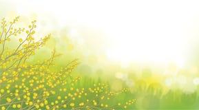 Flores de la mimosa del vector libre illustration