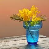 Flores de la mimosa en florero de cristal azul Foto de archivo