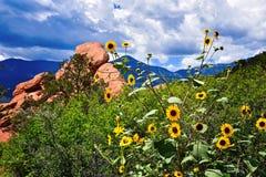 Flores de la montaña Fotos de archivo