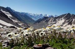 Flores de la montaña fotografía de archivo libre de regalías