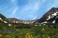 Flores de la montaña. Imagenes de archivo