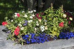 Flores de la montaña Fotografía de archivo