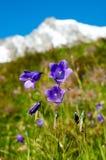 Flores de la montaña Imagenes de archivo