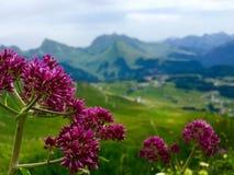 Flores de la montaña Foto de archivo