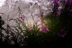 Flores de la montaña imagen de archivo
