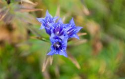 Flores de la montaña en el período del otoño Fotografía de archivo