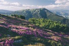Flores de la montaña en un día soleado tono del color Ins bajo del contraste Foto de archivo libre de regalías