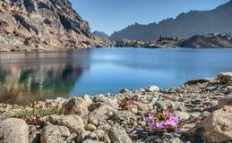 Flores de la montaña púrpura por el lago alpino en montañas de la cascada Fotografía de archivo