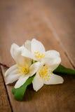 Flores de la naranja falsa en la madera rústica Fotos de archivo