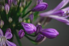 flores de la naturaleza Imagen de archivo