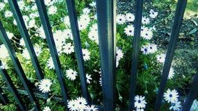 Flores de la naturaleza de la fotografía Foto de archivo