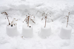 Flores de la nieve Foto de archivo