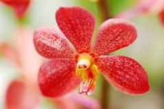 Flores de la orquídea Imagenes de archivo