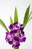 Flores de la orquídea fotos de archivo