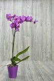 Flores de la orquídea Imágenes de archivo libres de regalías