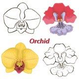 Flores de la orquídea. contornos de flores. Imagen de archivo