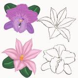Flores de la orquídea. contornos de flores. Foto de archivo