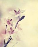 Flores de la orquídea del Grunge Imágenes de archivo libres de regalías