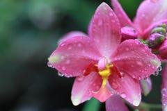 Flores de la orquídea en detalles Fotografía de archivo