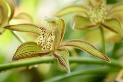 Flores de la orquídea en el fondo de la naturaleza Imagen de archivo libre de regalías