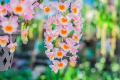Flores de la orquídea en el jardín Imagen de archivo