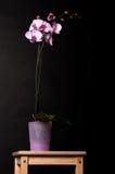 Flores de la orquídea en taburete de madera Foto de archivo libre de regalías