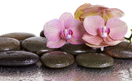 Flores de la orquídea y piedras negras Fotografía de archivo libre de regalías