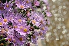 Flores de la púrpura del verano imagenes de archivo