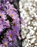 Flores de la púrpura del verano foto de archivo libre de regalías