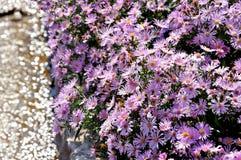 Flores de la púrpura del verano imagen de archivo