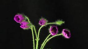 Flores de la púrpura de la floración metrajes