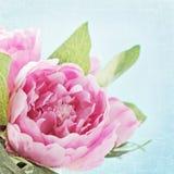 Flores de la peonía fotografía de archivo