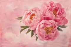Flores de la peonía Imagen de archivo