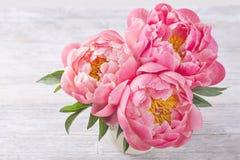 Flores de la peonía Fotos de archivo libres de regalías