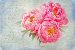 Flores de la peonía Foto de archivo