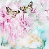 Flores de la peonía con la mariposa Imagen de archivo libre de regalías